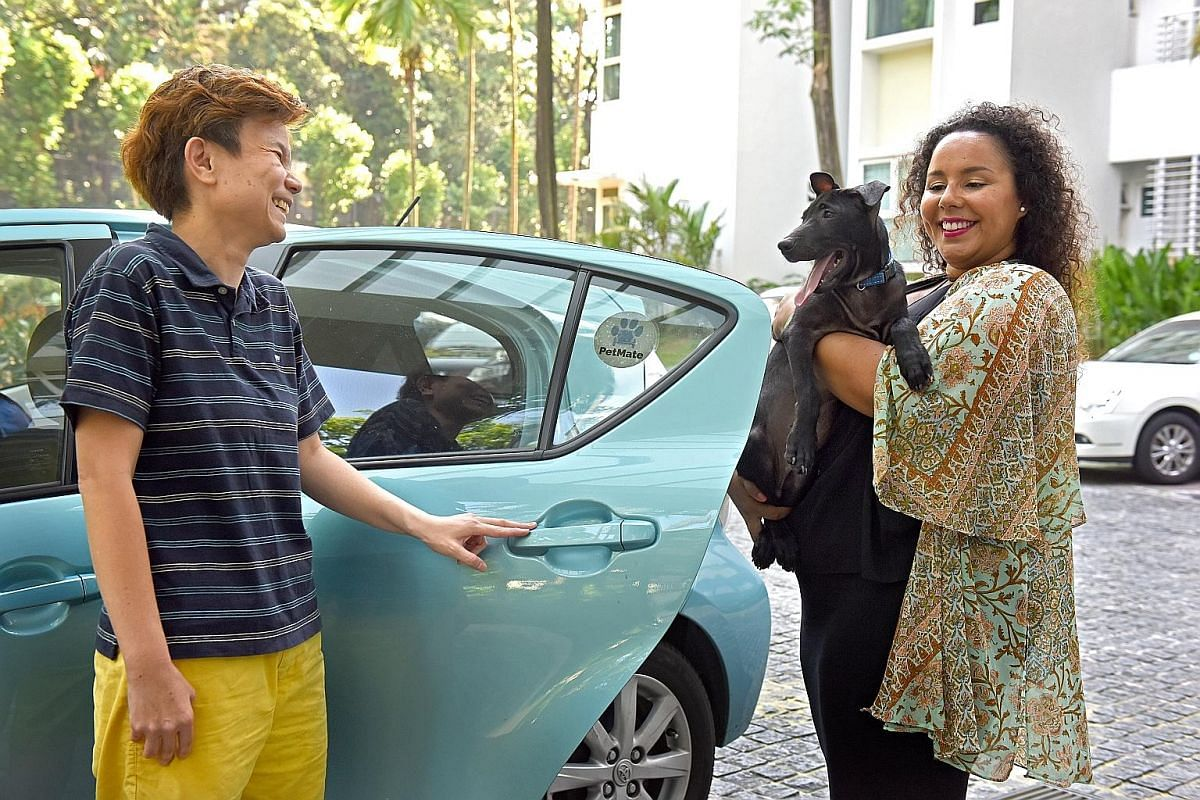 """Ms Yong Yi Wen, a staff member from The Wagington, takes British bulldog Button to the luxury pet hotel's """"limo"""". Like Uber for pets, the app-based PetMate matches drivers to pets and pet owners who want a ride. Here, PetMate driver Lilian Low is giv"""