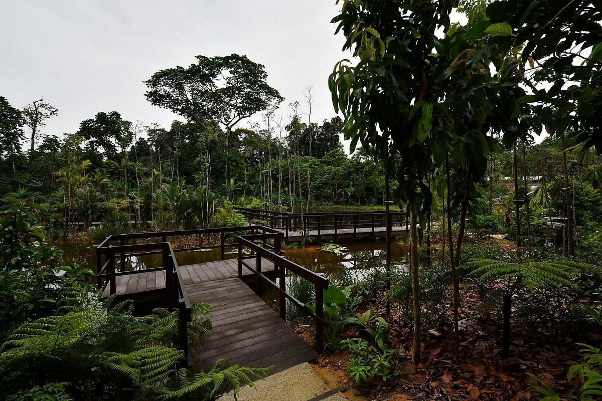 The Pulai Marsh at the Keppel Discovery Wetlands.