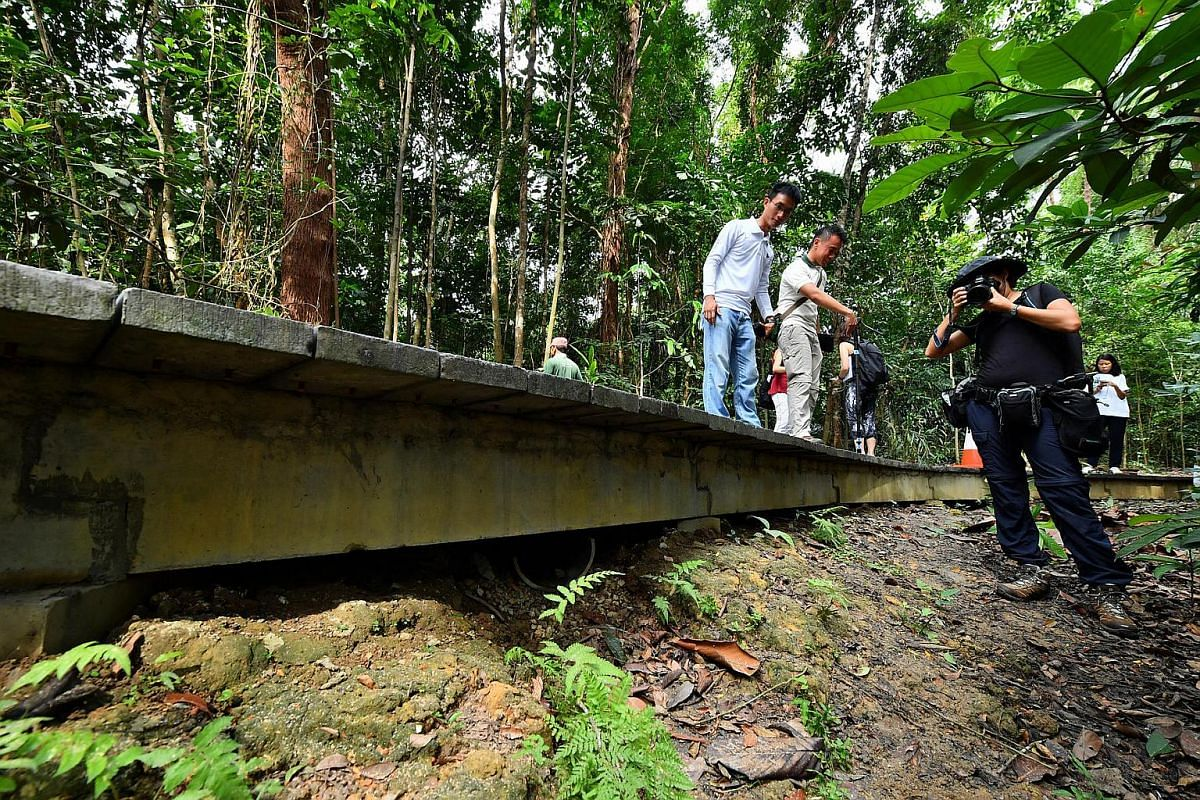 Tunnels built under forest boardwalks to facilitate wildlife crossing.