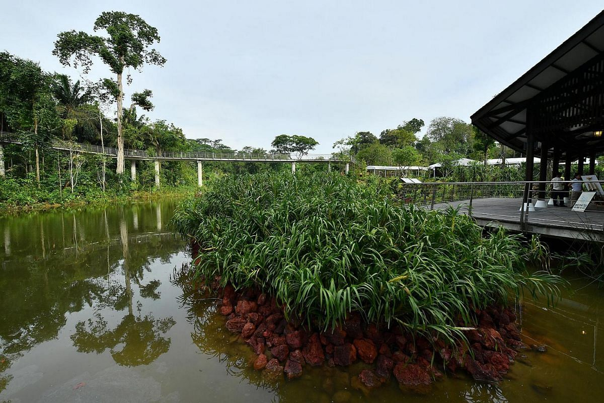 Orchid Islands at the Keppel Discovery Wetlands.
