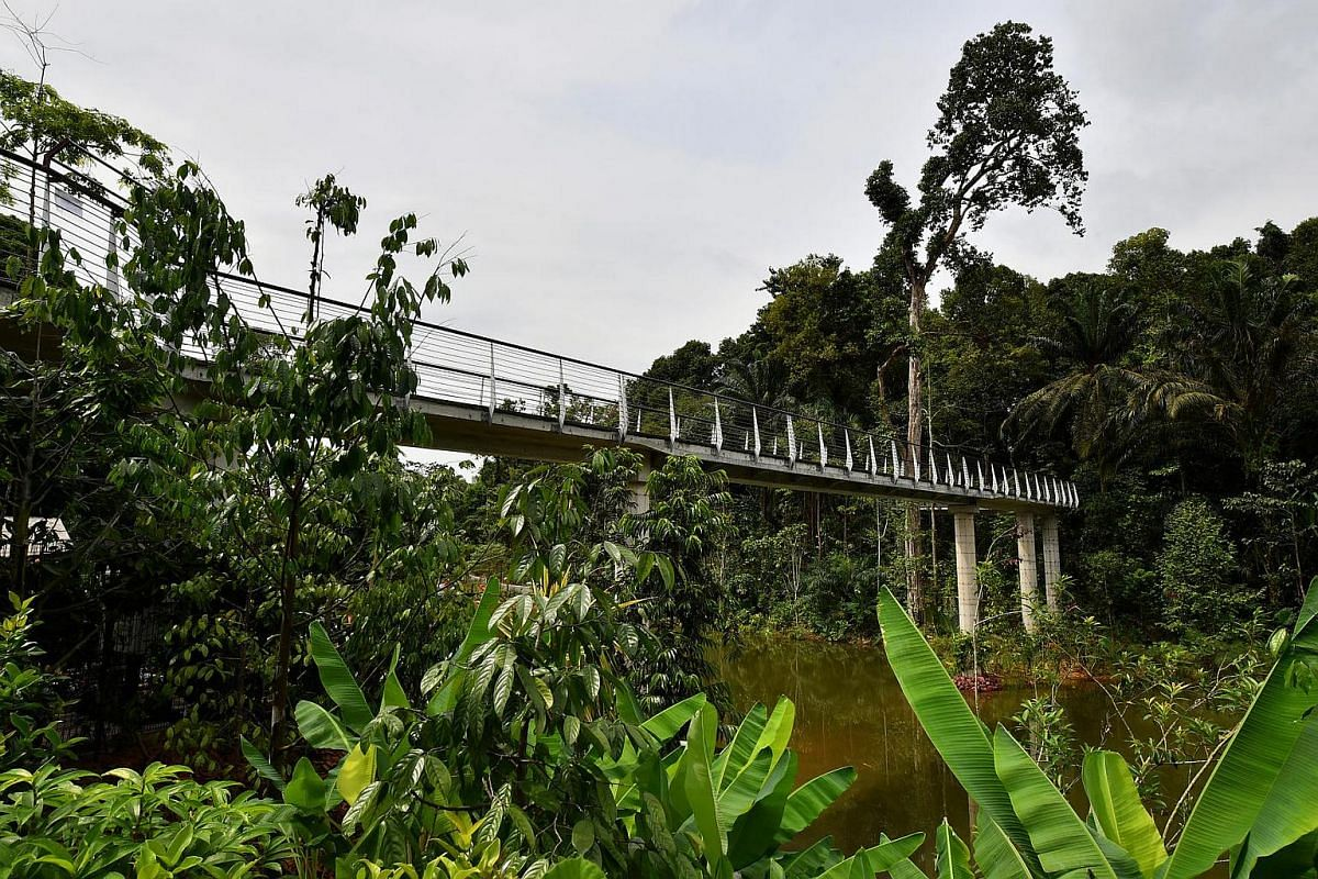 Elevated walkway at the Keppel Discovery Wetlands.