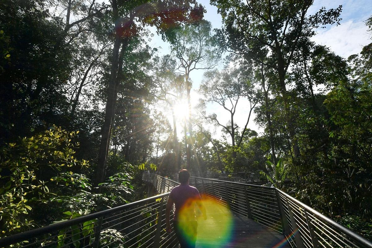 The Botanists' Boardwalk (left) and the elevated walkway (left, below) are part of the Keppel Discovery Wetlands in the Learning Forest. The boardwalk features different plants which have been collected from around South-east Asia and named in honour