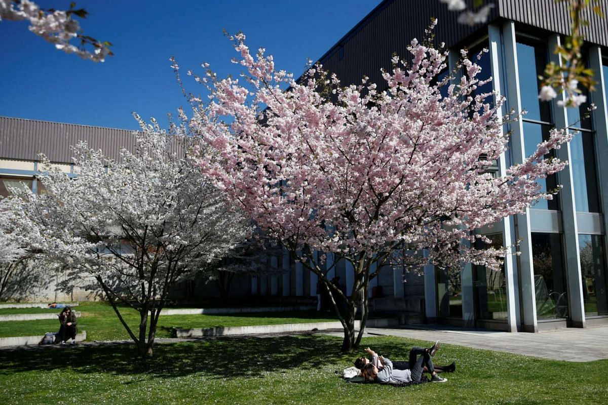 People taking pictures of cherry blossoms on a sunny spring day in Lausanne, Switzerland, on March 27, 2017.