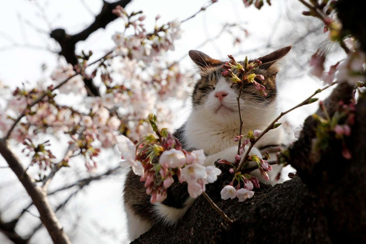 A picture purr-fect day at a park in Tokyo, Japan, on March 30, 2017.