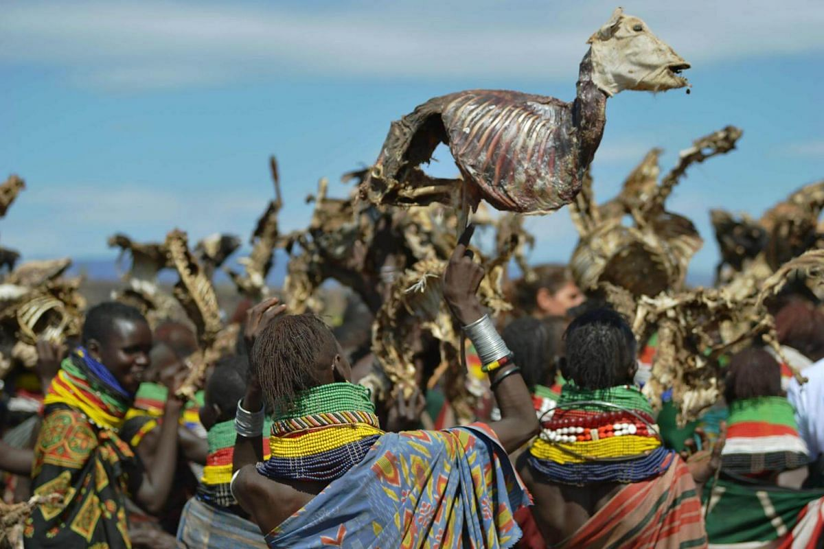 Turkana women carrying the carcasses of animals they lost to a drought, in northern Kenya, near Lokitaung, on March 20, 2017.