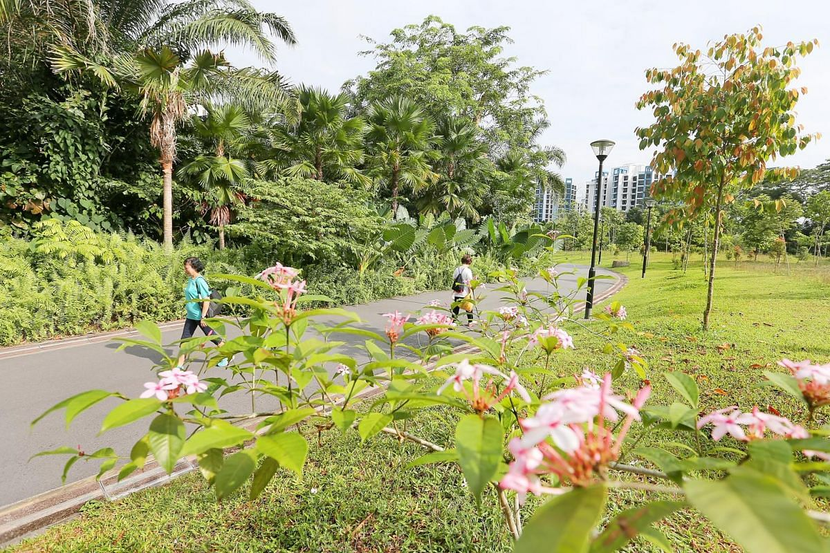A photographer at the Dipterocarp Arboretum at Yishun Park. Zhenghua Nature Park is rich in birdlife and has a designated area of mature trees and collections of ferns, palms and bamboos.