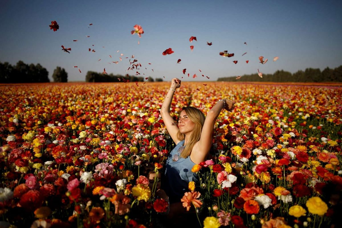 A woman poses for a photographer in a buttercup flower field near Kibbutz Nir Yitzhak in southern Israel, just outside the Gaza Strip April 18, 2017. PHOTO: REUTERS