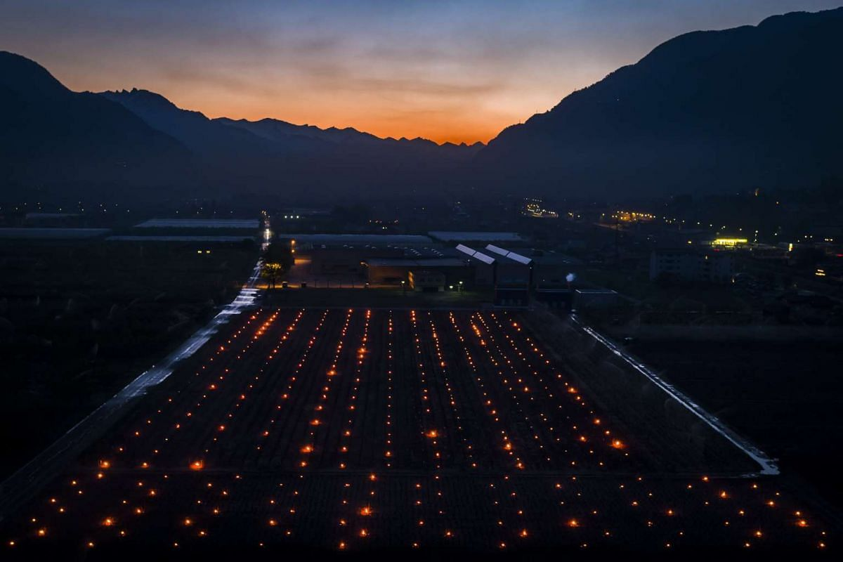 Anti-frost candles burn in a vineyard, in the middle of the Swiss Alps mountains, in Saxon, Canton of Valais, Switzerland, early April 20, 2017. Due to unusual low temperatures wine growers try to protect their grape shoots with anti-frost candles. P