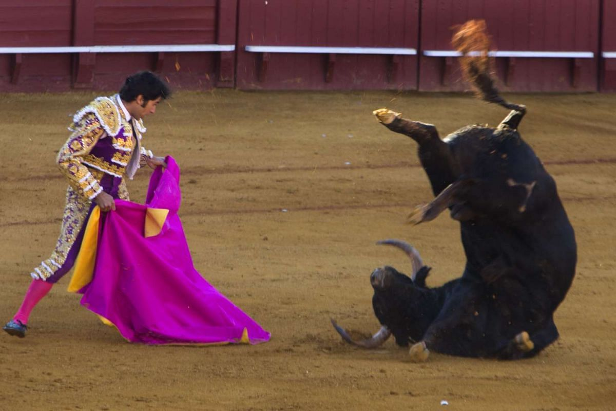 Spanish bullfighter Cayetano watches as a bull from the Daniel Ruiz ranch flips over onto his back after its horns crashes into the sand during a bullfight in the Feria de Abril (April Fair) in Seville, Spain.