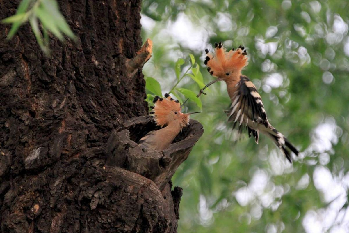 A bird feeds a baby bird at a park in Beijing, China, May 3, 2017.