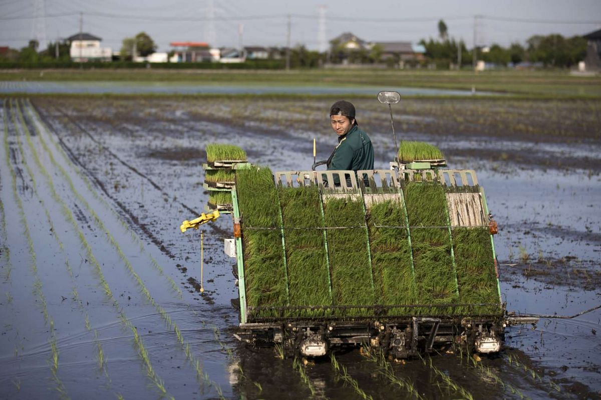 A farmer planting rice seedlings using a rice transplanter in a paddy field at the Farm Yamamoto in Kawachi, Ibaraki, Japan, on Tuesday, May 2, 2017.