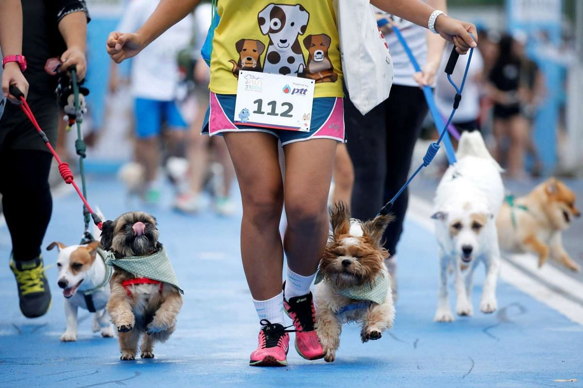 People run with their pets during a mini-marathon for dogs in Bangkok, Thailand  on May 7, 2017.