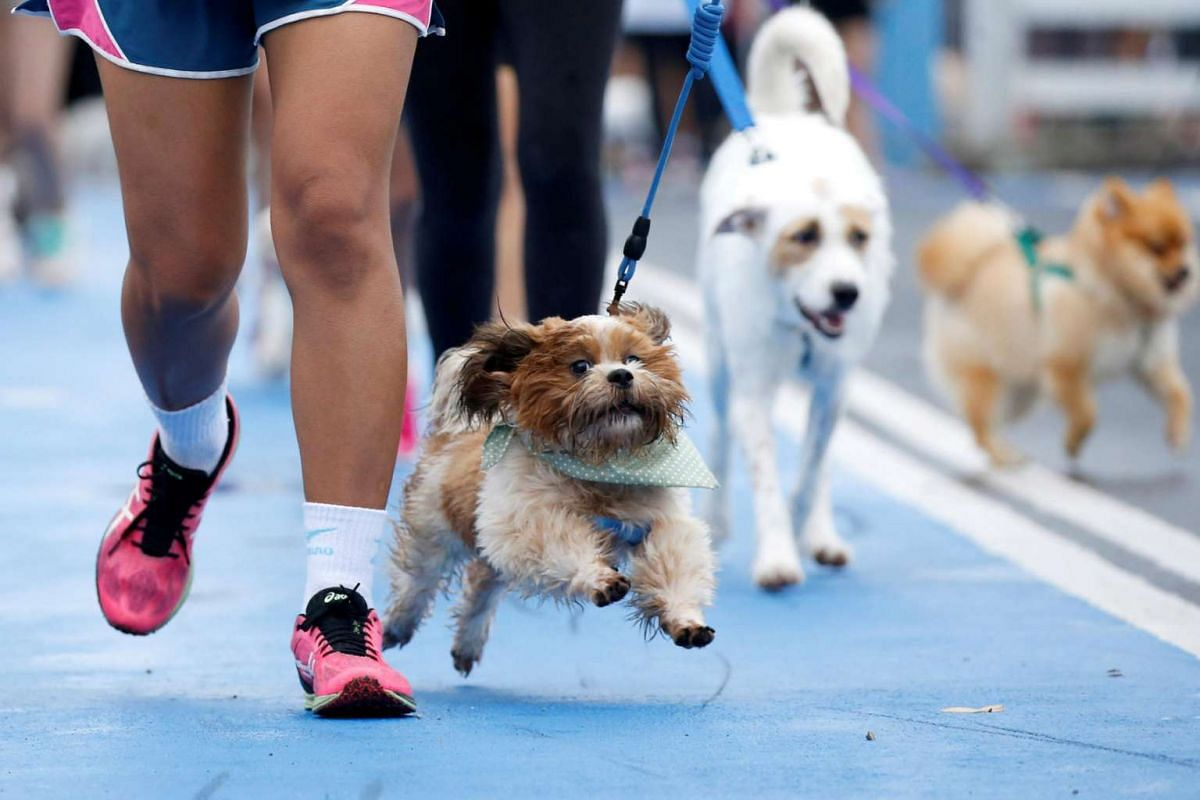 People running with their pets during a mini-marathon for dogs in Bangkok, Thailand, on May 7, 2017.