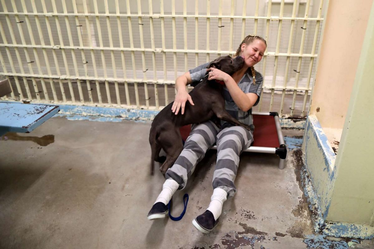 Inmate Kristina Hazelett, 35, plays with a dog in a cell at the MCSO Animal Safe Haven (MASH) Unit in a former jail that has become a shelter for abused and neglected animals seized in Maricopa County Sheriff's Office investigations, in Phoenix, Ariz