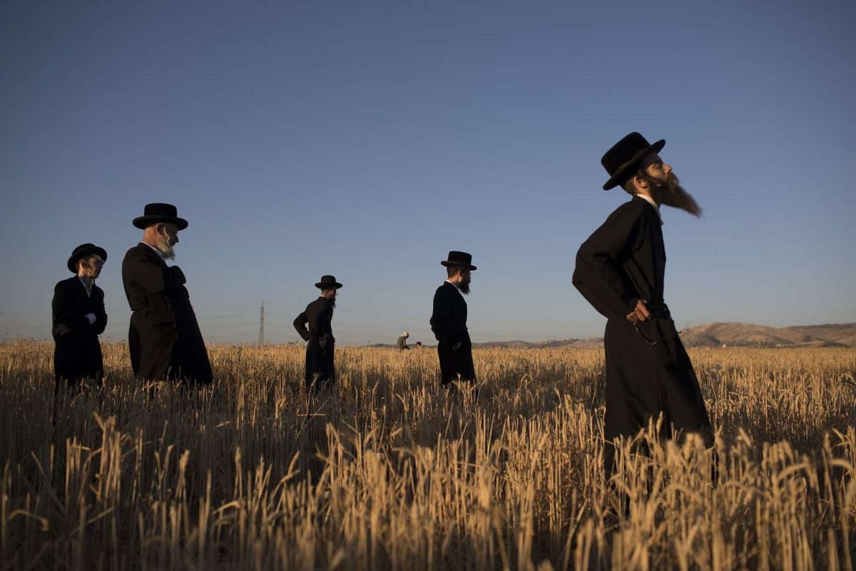 Ultra-Orthodox Jews pray as others harvest wheat in a field near the central Israeli town of Modi'in, May 11, 2017. The harvested wheat will be stored for almost a year and then use it to grind flour to make unleavened bread for the week-long Passove