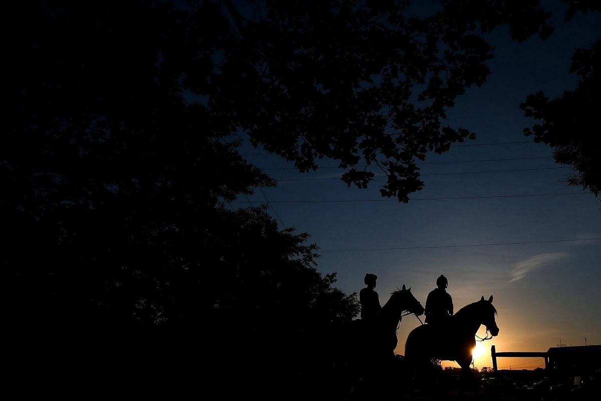 Preakness contender Hence (left) is guided back to the barn area following a training session for the upcoming Preakness Stakes at Pimlico Race Course in Baltimore, Maryland on Wednesday (May 17).