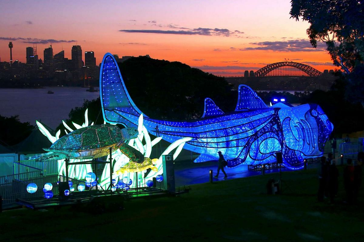 The Sydney Harbour Bridge can be seen behind a visitor at a preview of Taronga Zoo's illuminated endangered animal sculptures walking past the Port Jackson shark and green turtle display at sunset, which is part of Vivid Sydney Festival of Light and