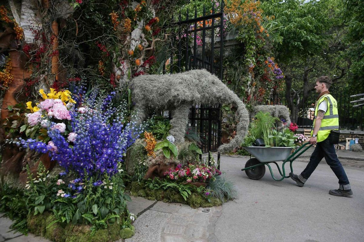 A gardener carries flowers in a wheelbarrow through 'Gateway to the Garden Safari' designed by Simon Lycett, through one of the entrances of the Chelsea Flower show in London on May 21.
