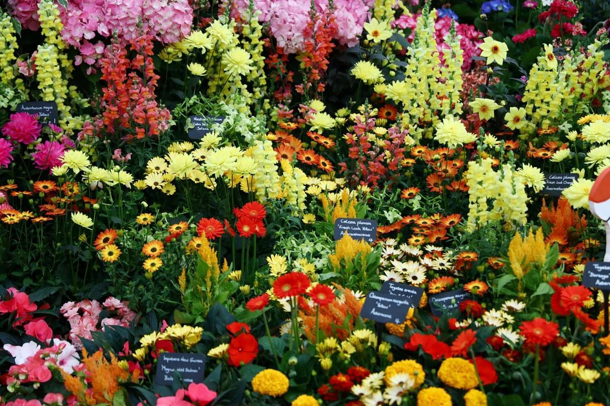 Various exhibits are displayed at the RHS Chelsea Flower Show in London, Britain on May 21, 2017.