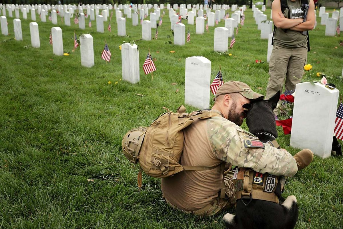 Earl Granville sits for a quiet moment with Zoe, a friend's 2-year-old assistance huskie dog, in Section 60 at Arlington National Cemetery on Memorial Day May 29, 2017 in Arlington, Virginia. PHOTO: GETTY IMAGES/AFP