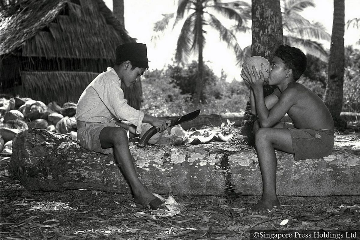 1950: Preparing coconuts for sale was hard work but satisfying too, as the boys could drink the coconut water when they were thirsty.