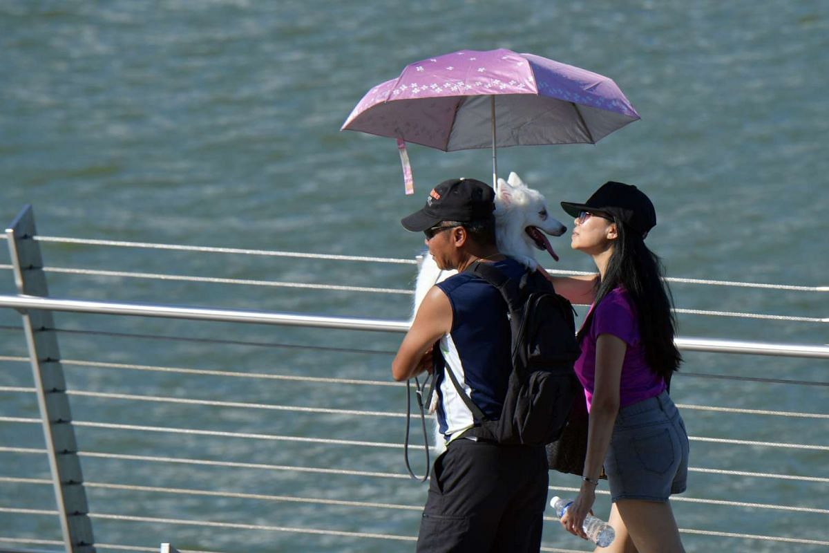 A couple shelters their dog from the heat with an umbrella as they walk across Singapore's Jubilee Bridge on Esplanade Drive, June 4, 2017. PHOTO: THE STRAITS TIMES/DESMOND FOO