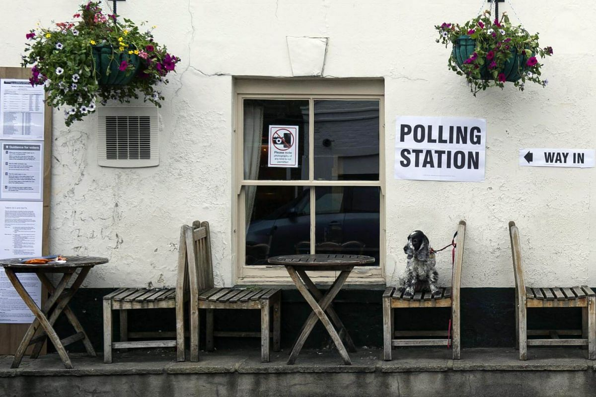 A dog sitting on a bench outside a polling station set up at the Anglesea Arms, in central London, on June 8, 2017.