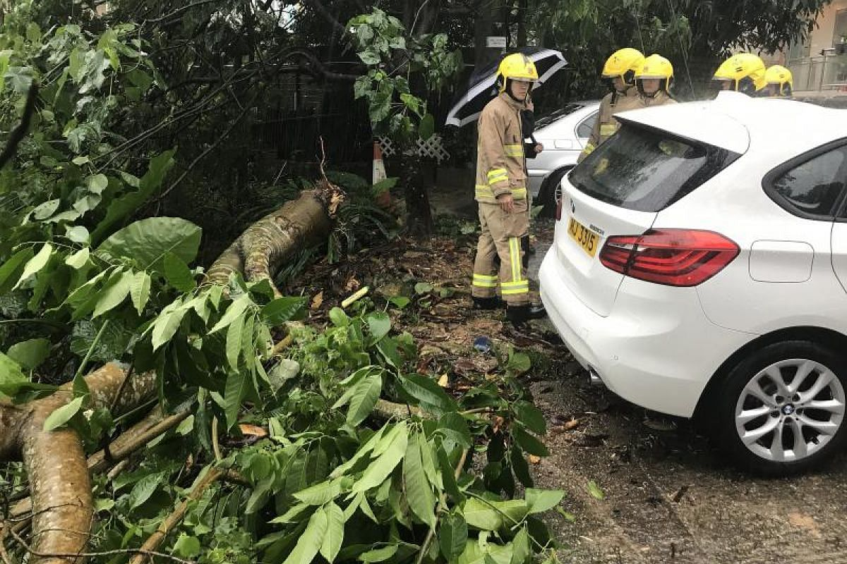 Firemen inspecting a fallen tree in Hong Kong's Sai Kung District in the wake of tropical storm Merbok on Tuesday (June 13).