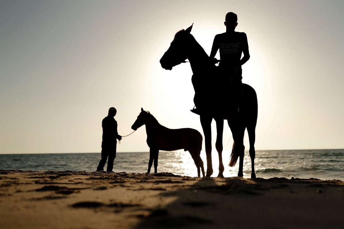 Palestinians lead horses out of the sea after cleaning them in the water in Gaza City on June 13, 2017