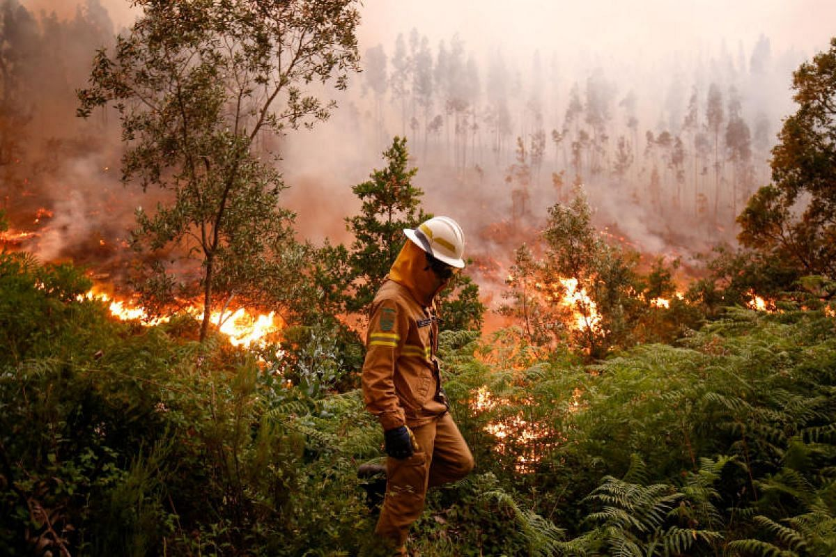 A firefighter working to put out a forest fire near the village of Fato in central Portugal on Sunday (June 18).