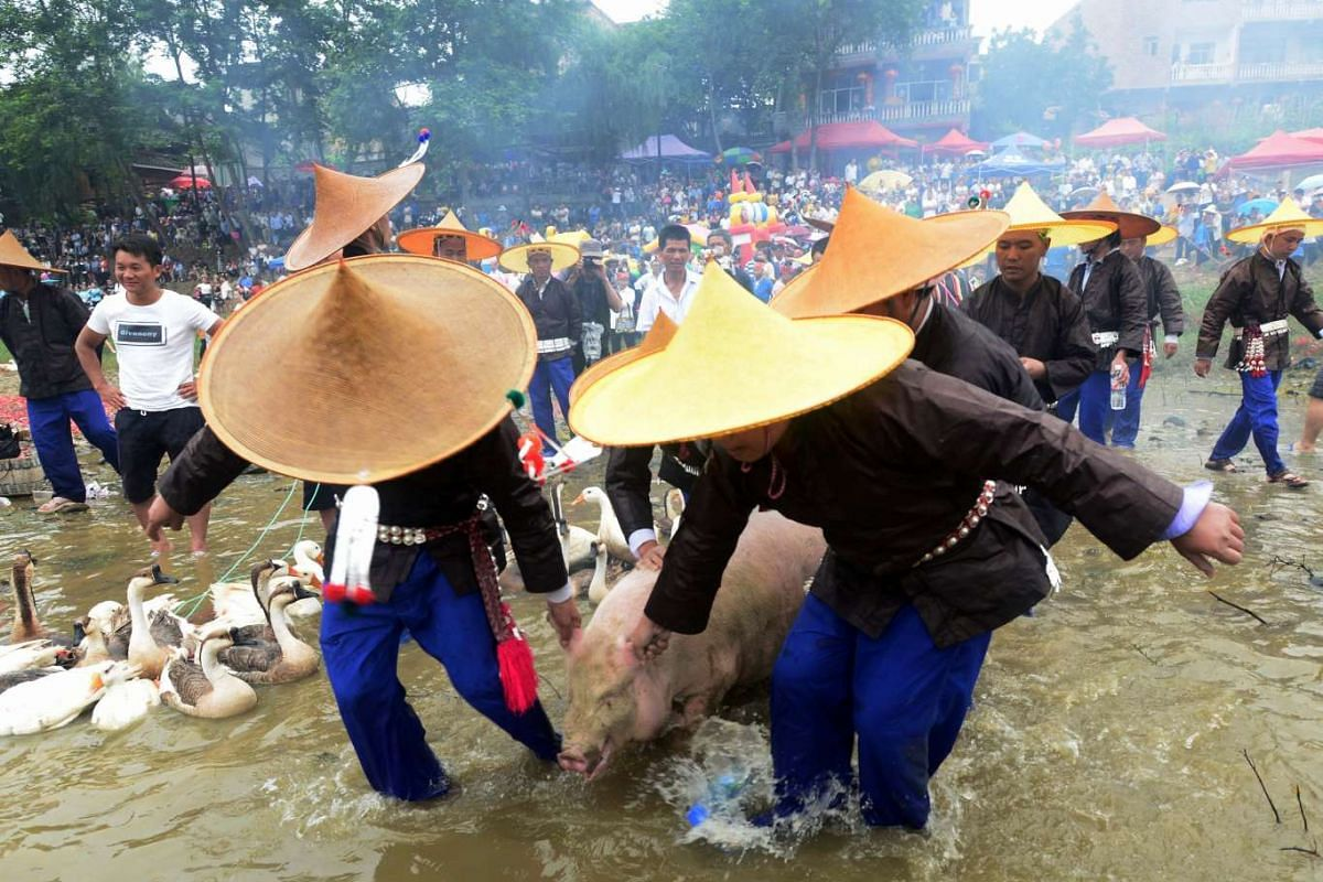 Villagers drag a pig onto a dragon boat during the Dragon Canoe Festival, which is one of the most important festivals celebrated by the Miao ethnic minority, in Taijiang county, Guizhou province, China June 19, 2017.