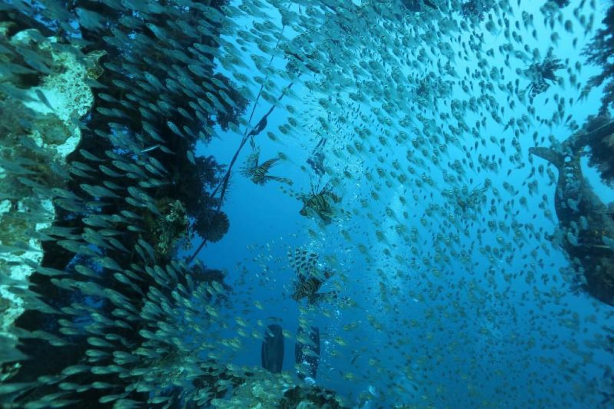 It is not unusual to find lots of marine life such as schools of fish among the thriving coral reefs of the Red Sea.