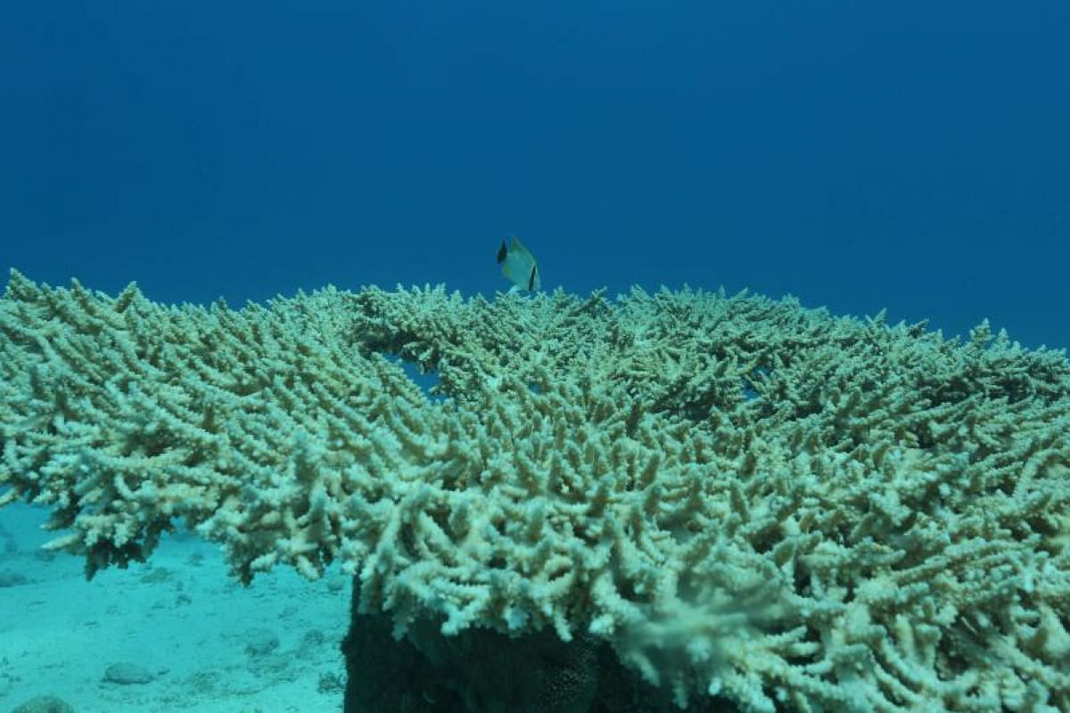 Coral reefs are thriving in the Red Sea off Eilat, partly thanks to the efforts of researchers from the Interuniversity Institute for Marine Sciences in Israel.