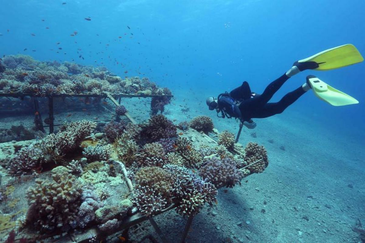 Come hell or high water, this researcher won't let anything get in his way in monitoring coral growth in the Gulf of Eilat.