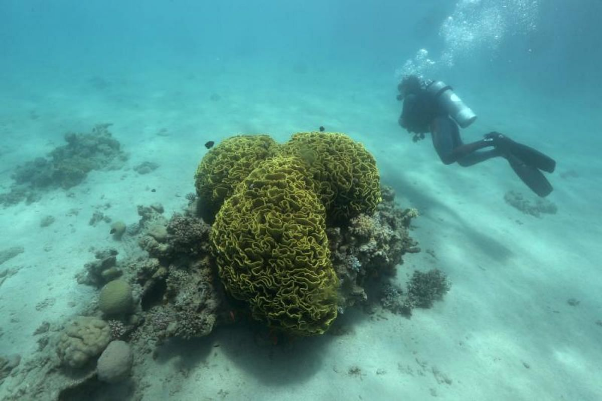 Diving deep into his passion is this researcher checking on coral reefs in the Gulf of Eilat.