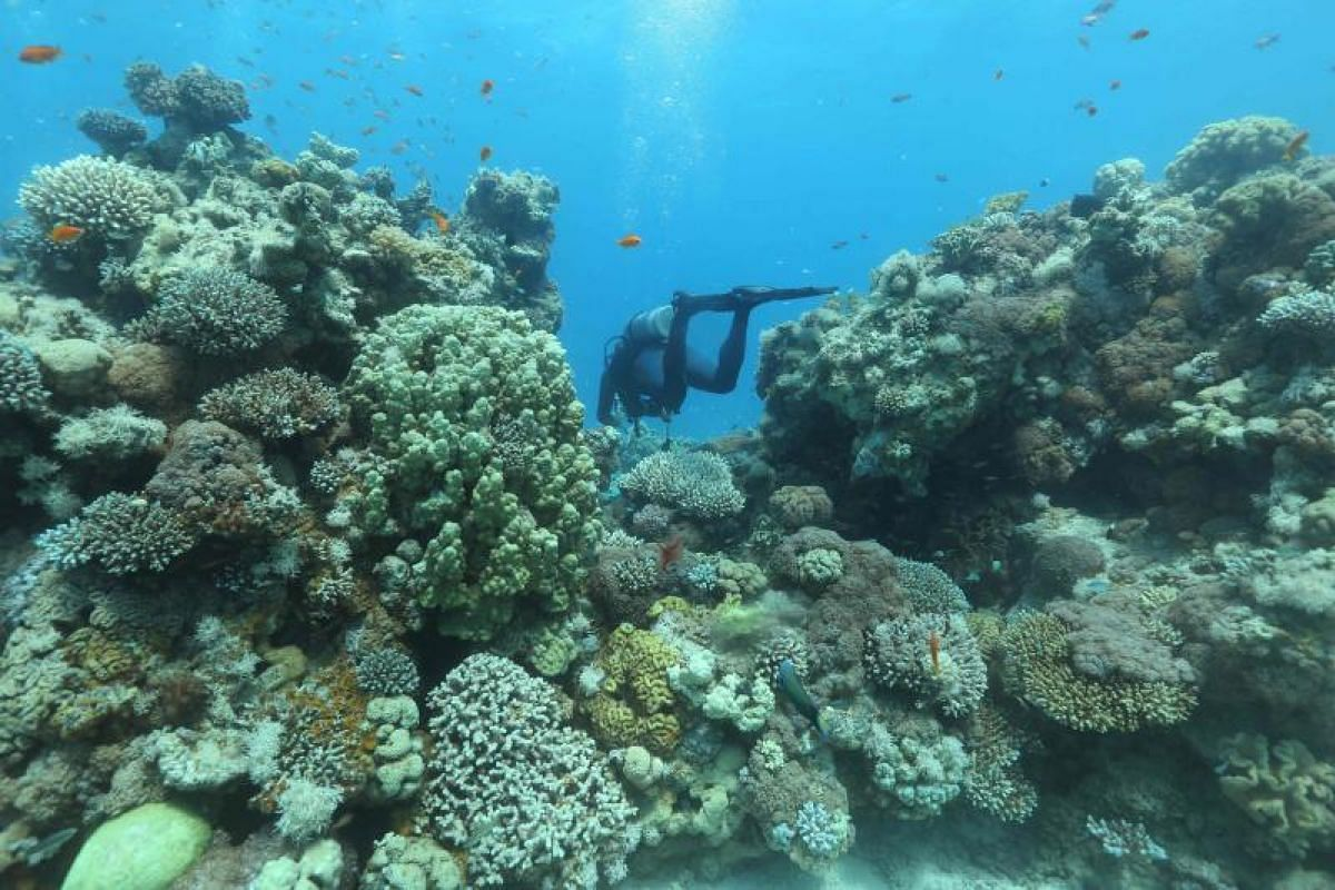 His work might not make much of a splash but this researcher still goes about it carefully as he checks on the coral reefs.
