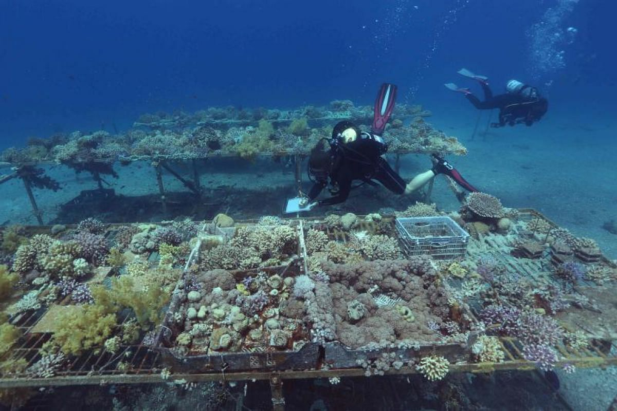 Marine monitoring is the forte of researchers from the Interuniversity Institute for Marine Sciences, who often go scuba diving in the Red Sea off Eilat.