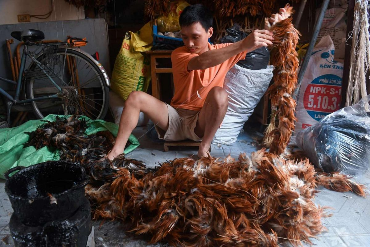 Nguyen Huy Tho organizes chicken feathers at his home in the outskirts of Hanoi. Fluffy, soft and easy to buy off the back of a bike: Vietnam's chicken feather dusters have ruled the roost for generations. But artisans fear for their future as buyers