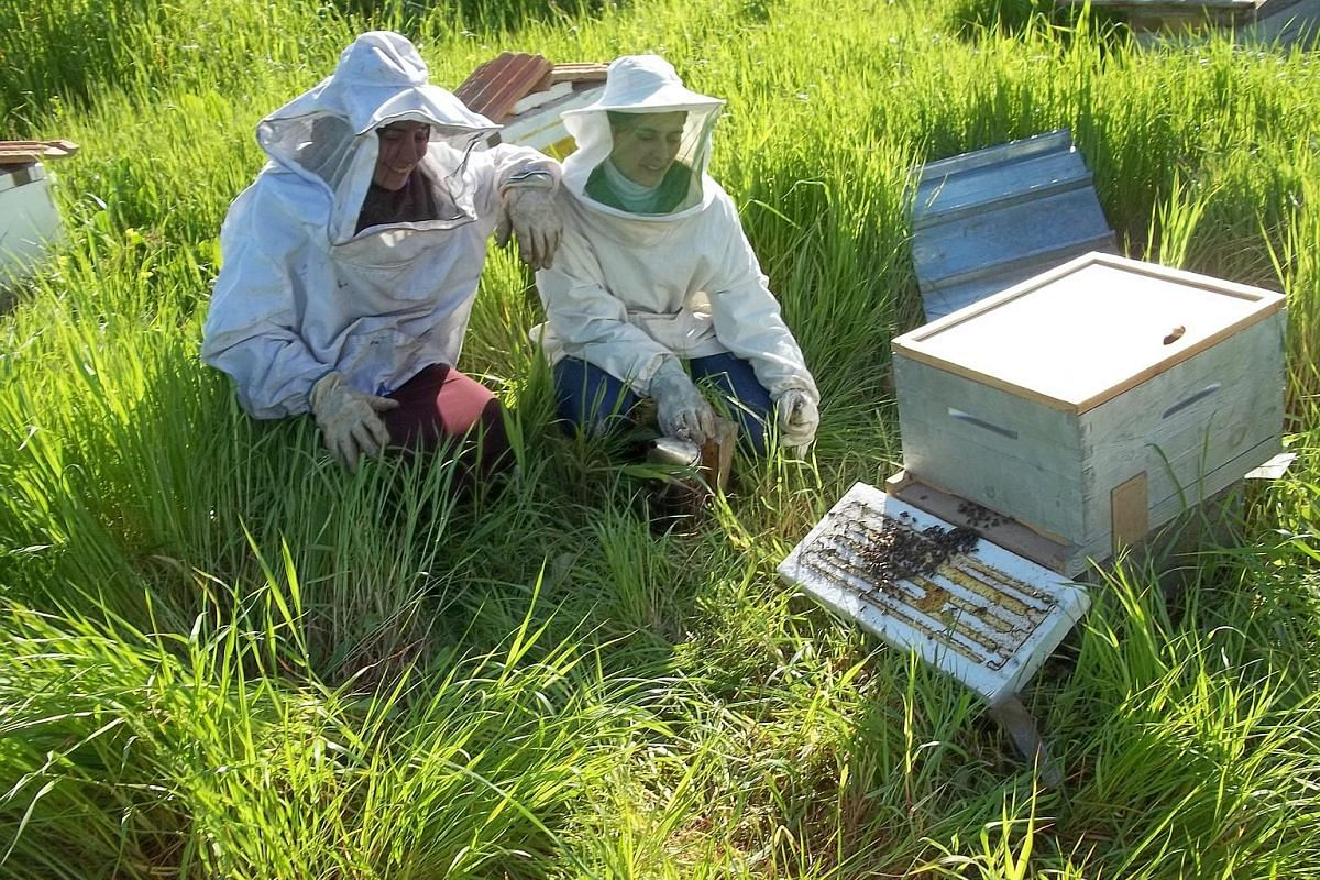 Beekeeping has become a vocation and source of income for women trained through the Association for the Promotion of Mountain Apiculture in Algeria. The methods taught emphasise environmental values and sustainable development.