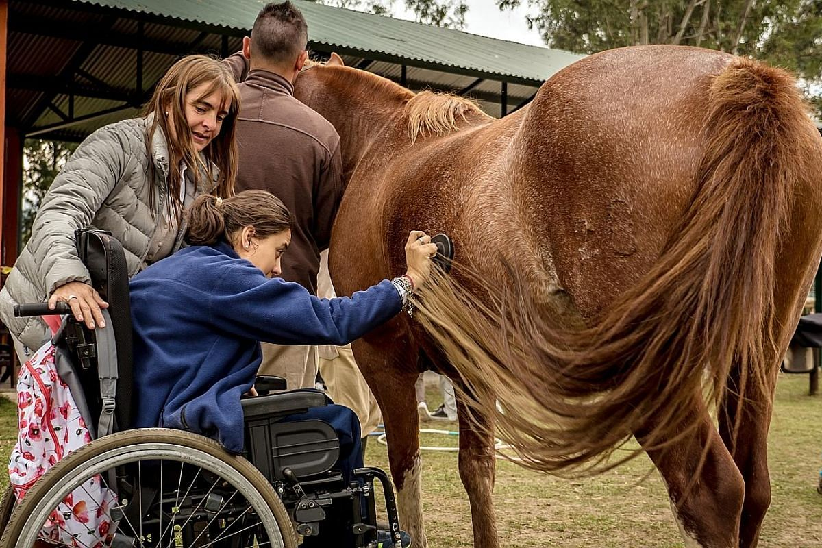 More than 250 centres throughout Argentina practise equine therapy, which seeks to aid the rehabilitation of illnesses involving physical or psychological disabilities.