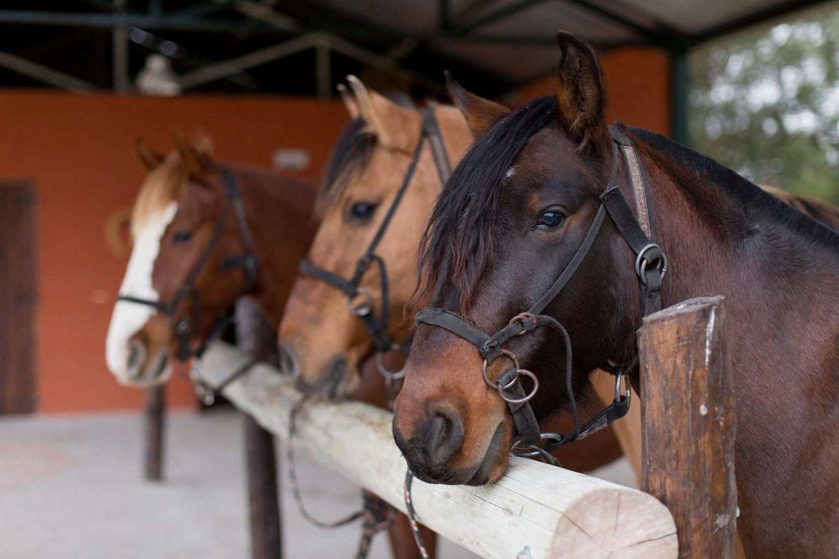 Horses at the Fundación Equinoterapia del Azul.