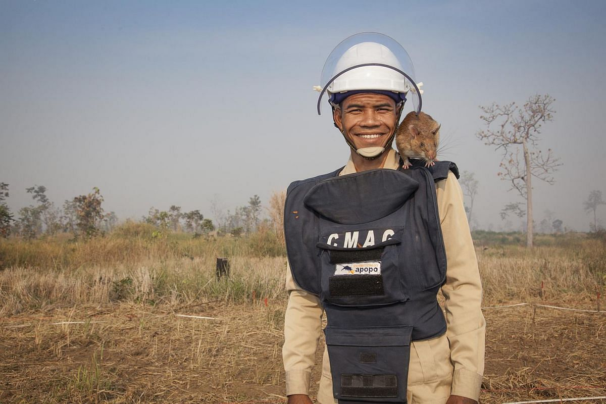 """The most satisfying aspect of my job is seeing people get back safely on to their land"", says Ok Chann with his HeroRAT Cletus."