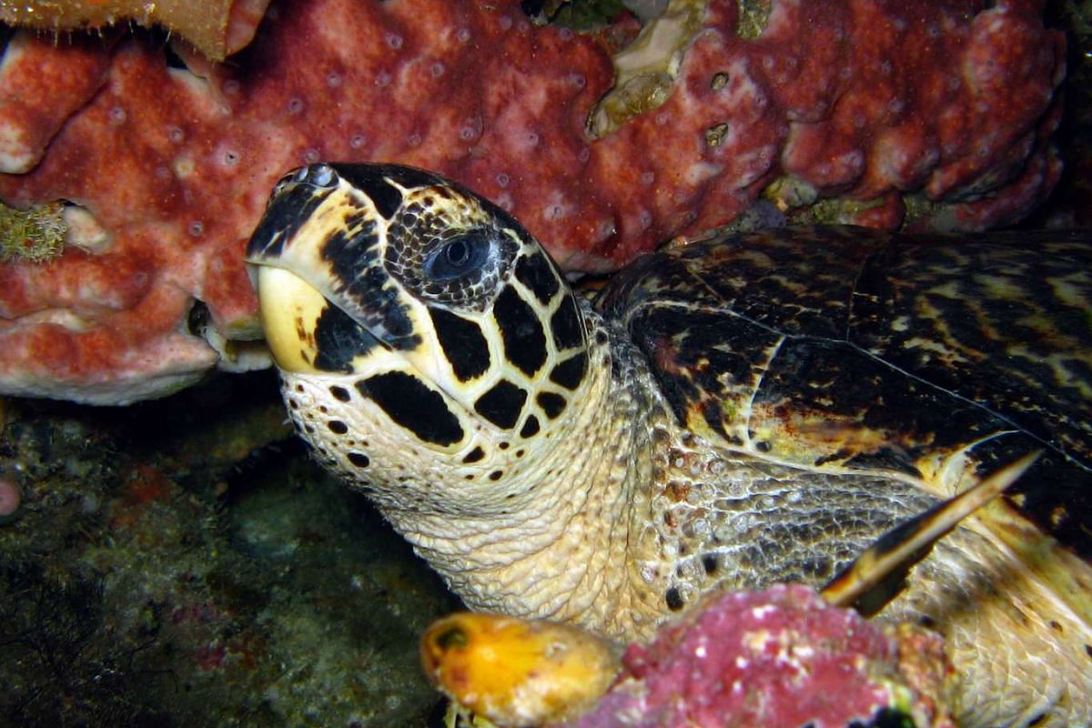 A hawksbill turtle (above) and a school of brassy chub at Bunaken Island; the island of Manado Tua; and a dolphin swimming beside the boat.