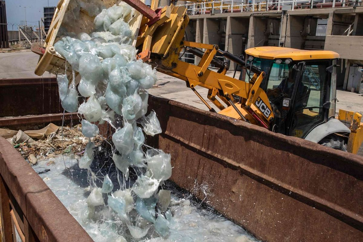 A digger drops hundreds of jellyfish crated away after being fished out of the cooling water supply at a power plant in the Israeli Mediterranean coastal city of Hadera, north of Tel Aviv, on June 27, 2017. PHOTO: AFP