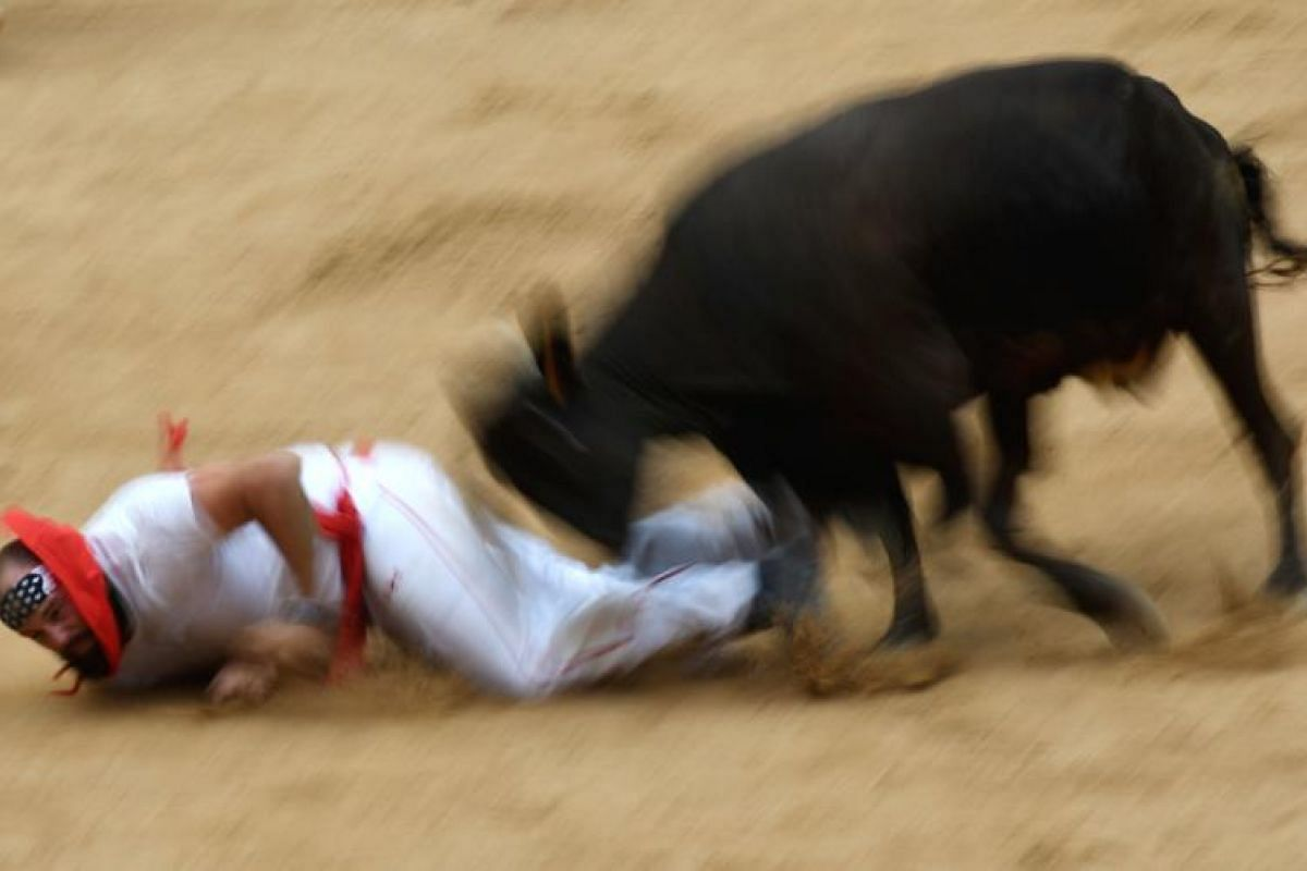 A wild cow charging a participant at Pamplona's bull ring during a show after the third encierro, or bull run, of the San Fermin Festival in Pamplona, northern Spain, on July 9, 2017.