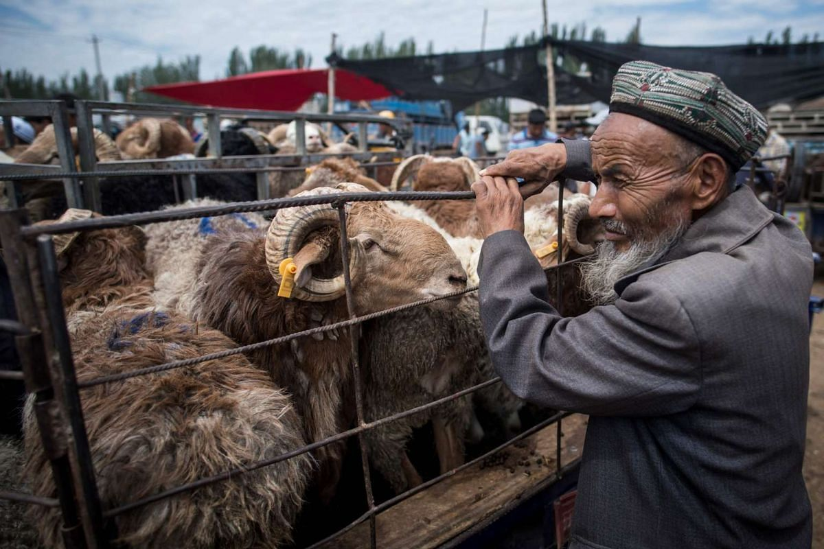 A man tending to goats in his vehicle at the livestock market in Kashgar in China's Xinjiang Uighur Autonomous Region.