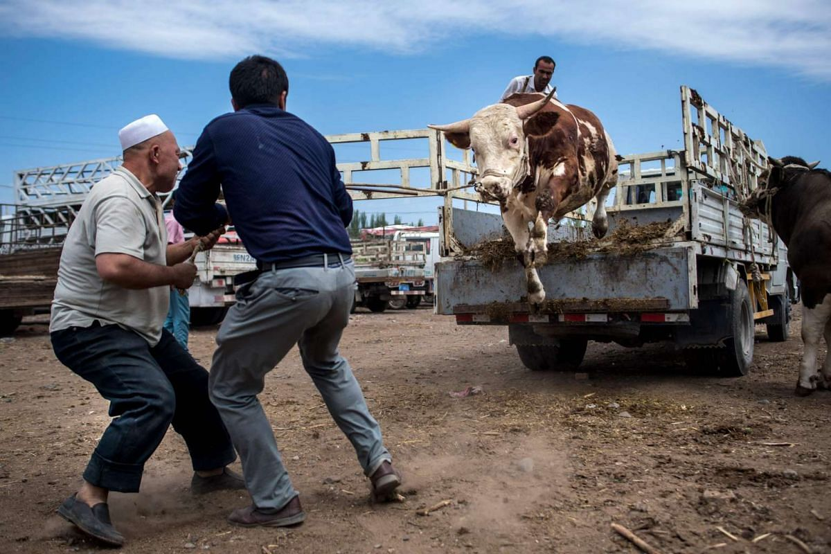 Men pulling a rope to unload a bull from a truck at the livestock market in Kashgar in China's Xinjiang Uighur Autonomous Region, a day before the Eid al-Fitr holiday.