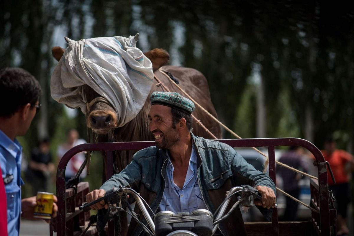 A Muslim man (right) talking to a policeman as he transports a cow at the livestock market in Kashgar in China's Xinjiang Uighur Autonomous Region on the eve of the Eid al-Fitr holiday.
