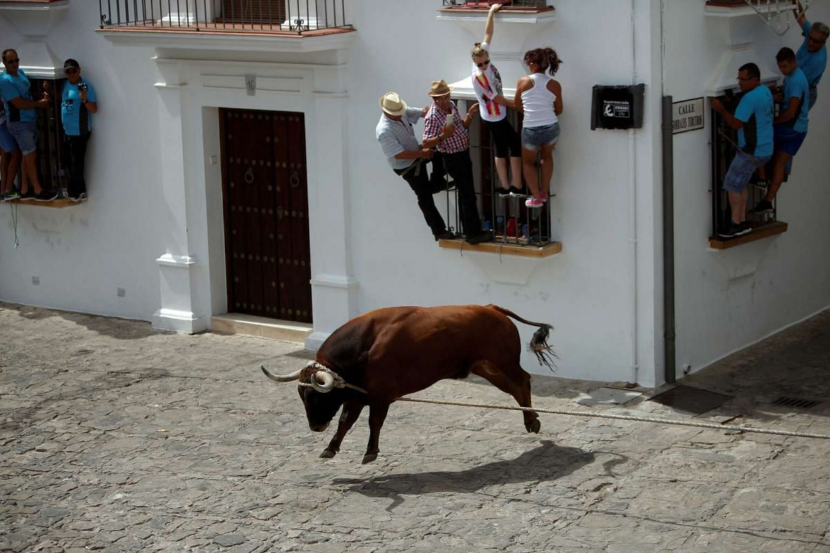 People hold onto windows to avoid a bull, named Trompetero, during the 'Toro de Cuerda' (Bull on Rope) festival in Grazalema, Spain, July 17, 2017. Three bulls restrained by a rope are allowed to run through the streets of the village during the annu