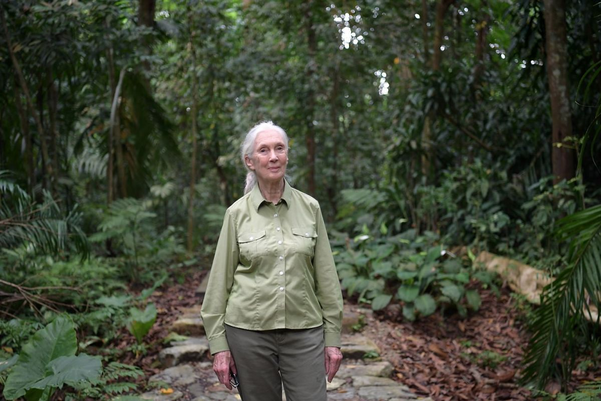 Dr Jane Goodall, who travels up to 300 days a year, was in Singapore recently to mark the 10th anniversary of the Jane Goodall Institute (Singapore).